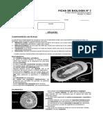 F3-Células