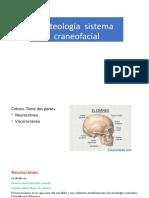 Osteología sistema craneofacial
