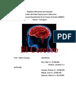 informe del cerebro