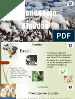 Agronegócio da cultura do algodão.pptx