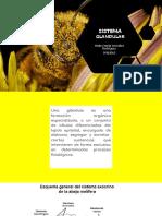 Exposición abejas