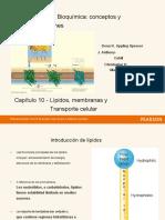 CH 10 - Lípidos.en.es.pdf