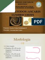 Neomatodos-Ascarasis-Lubricoides