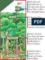 Rain forest layers.pdf