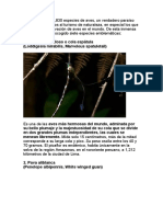 BIRDS PERU