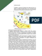 mecanismo de accion de inmunosupresores