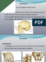 9134 - Anatomia 80-130