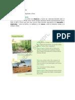 Guia de Cs sociales 4 B3.doc