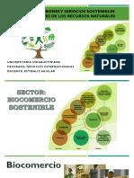 12 - Categoria Bienes y servicios de recursos naturales (1).pdf