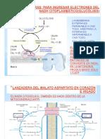 Tema 50-Fase Oxidativa.pdf
