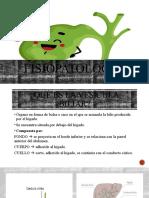 Vesicula biliar y vias hepaticas (fisiopatologia)