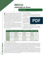 Micorrizas 2.pdf
