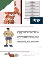 742.-sistemul-muscular