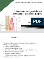 Formarea joncţiunii dentogingivale şi a şanţului gingival