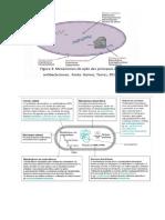 Classificação e mecanismo de ação ATB