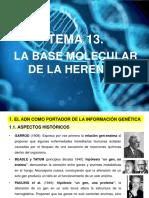 TEMA 13 LA BASE MOLECULAR DE LA HERENCIA