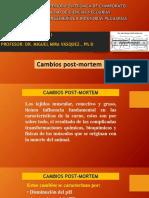 CAMBIOS POST-MORTEM 5
