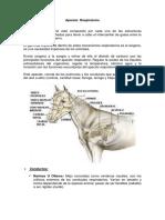 Anatomia Aparato  Respiratorio