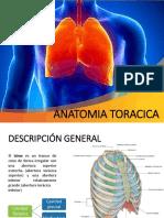 anatomiatoracica-150408111603-conversion-gate01