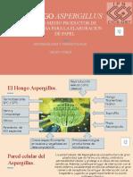 Hongo Apergillus para la produccion de papel .pptx