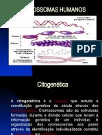 CROMOSSOMAS AULA I Citogenética