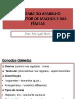 cap2 anatomia do APARELHO FEMENINO E MASCULINO1.pdf
