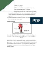 Comportamiento posterior de la pierna (1)