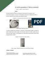 permeabilidad de suelos granulares