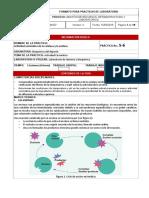 actividad enzimatica 1 (3)