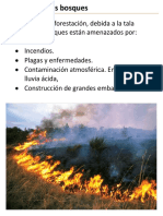 amenaza a los bosques