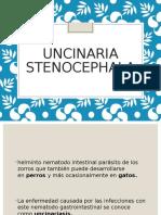 259743883-UNCINARIA-STENOCEPHALA