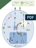 CMH-mecanismes.pdf