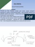 frontal si parietal