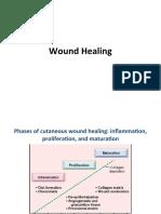 Wound_Healing