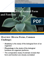40_lecture_animal_form_function.ppt