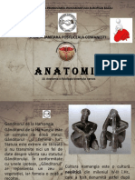 Anatomie curs 10 (1).pdf