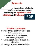 Epidermis-part-1