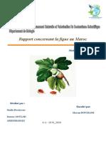 Rapport Bouziane