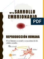 Desarrollo embrionario expo