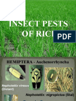 common pests of field crops.ppt