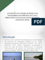 AVALIAÇÃO NA CAPTURA DE PEIXES COM MALHADEIRAS.pdf