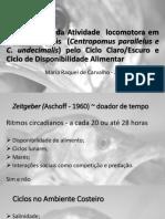 Sincronização da Atividade  locomotora em Robalos Juvenis.pdf