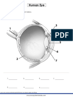 Human-eye-diagram