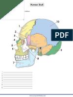 Human-skull-answer