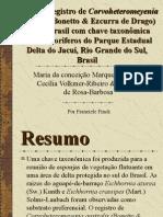 Primeiro registro de Corvoheteromeyenia australis (Bonetto & Ezcurra de Drago) para o Brasil com chave taxonômica para os poríferos do Parque Estadual Delta do Jacuí, Rio Grande do Sul, Brasil