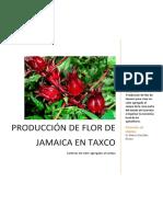 produccion de jamaica proyecto productivo .docx
