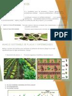 CLASE INTRODUCCION AGRICULTURA SOSTENIBLE.pptx