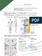 Basi dell'anatomia