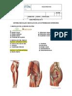PRACTICA MIEMBROS INFERIORES (1)