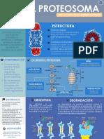 Infografia proteosoma